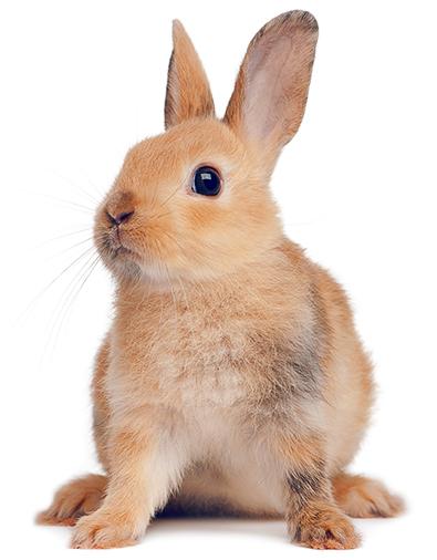 Assurance lapin nac mutuelle pour lapin nac sant vet - Comment couper les griffes d un lapin ...