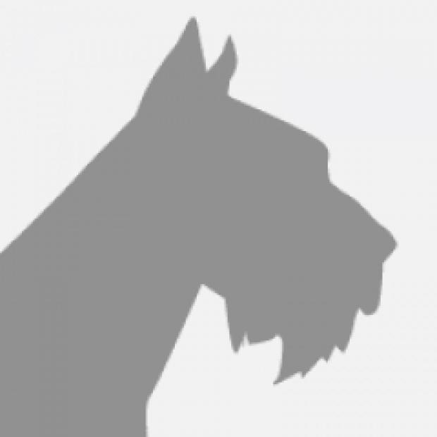 mon chien s est fait mordre que faire sant vet. Black Bedroom Furniture Sets. Home Design Ideas