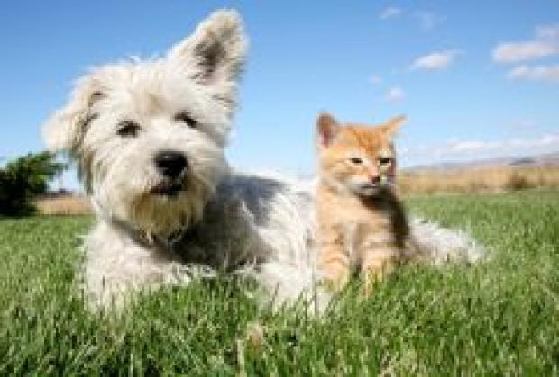 Les allergies saisonnières chez le chien et chat