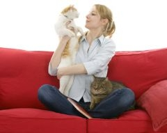 Toxoplasmose chez le chat : quels risque pour la femme enceinte ?