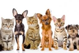 Le 1er Observatoire sur les Français et leurs animaux
