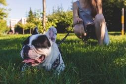 Alerte Canicule : protégez votre animal de la chaleur !