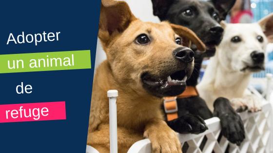 Adopter Un Animal De Refuge Trucs Astuces Chien Santevet