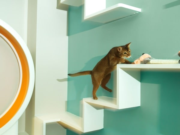 paris le premier h tel pour chats f te ses un an actualit chat sant vet. Black Bedroom Furniture Sets. Home Design Ideas