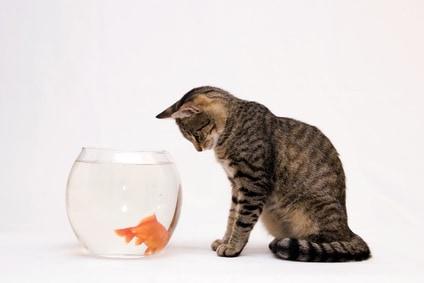 Education mettez la curiosit de votre chat profit for Poisson bocal