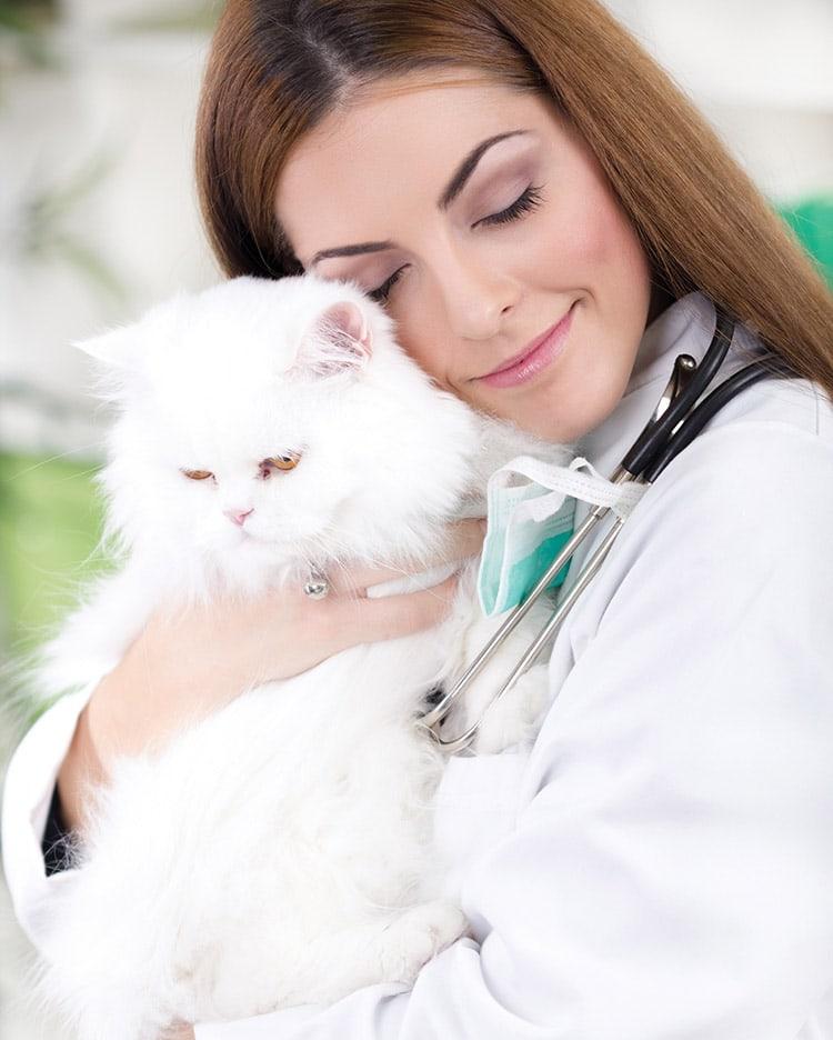 Parasites internes chez le chat : des vers ronds et plats
