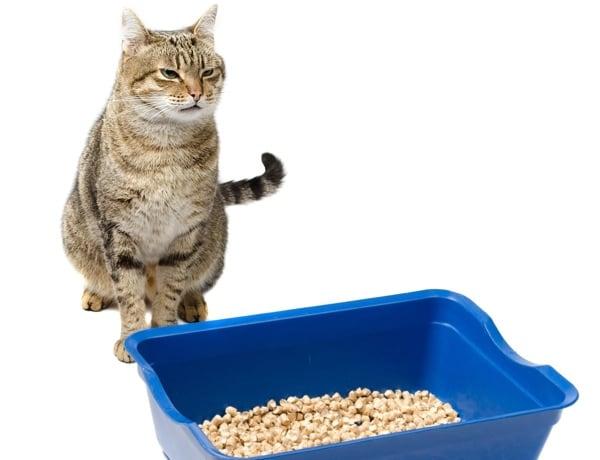 quelles solutions pour un chat qui fait pipi partout ? - santévet