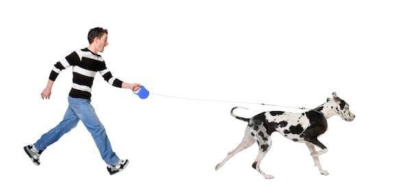 Apprenez à votre chien à ne pas tirer sur sa laisse
