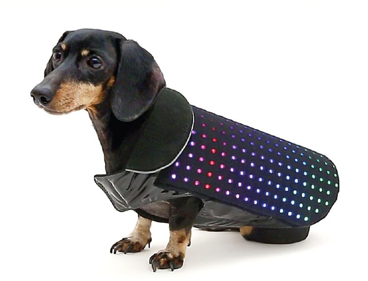 disco dog un manteau pour chien leds actualit chien sant vet. Black Bedroom Furniture Sets. Home Design Ideas
