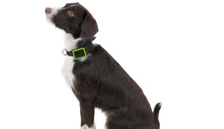 un collier gps pour ne jamais perdre son chien trucs astuces chien sant vet. Black Bedroom Furniture Sets. Home Design Ideas