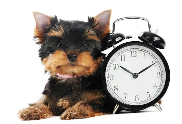 Changement d heure chiens et chats y sont sensibles actualit chien sant vet - Changement heure ete 2017 ...