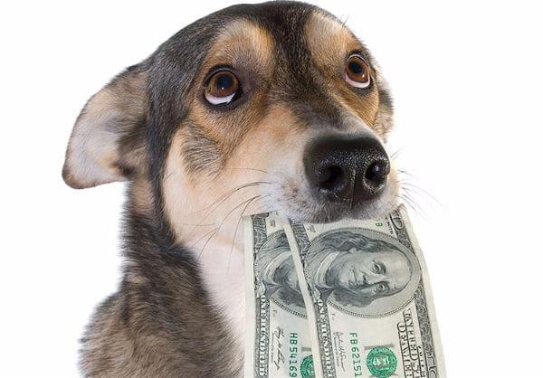 Imp ts sur les chiens ces pays qui taxent les animaux actualit chien sant vet - Image animaux gratuite ...