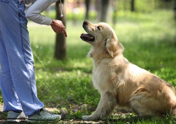 Une chienne qui aime quand c'est brutal