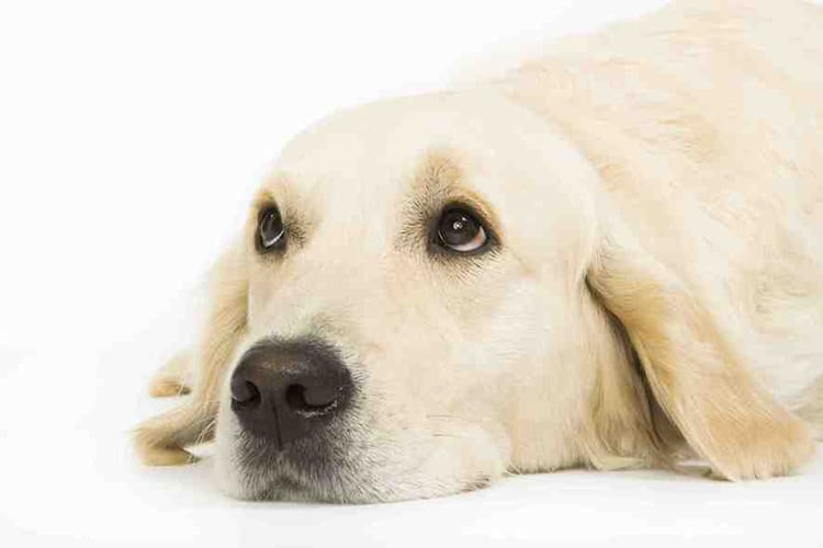 chiens et chats attention aux aliments toxiques dossiers chien sant vet. Black Bedroom Furniture Sets. Home Design Ideas