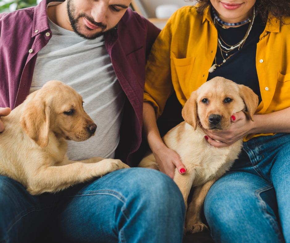 espérance de vie des chiens suivant leur race
