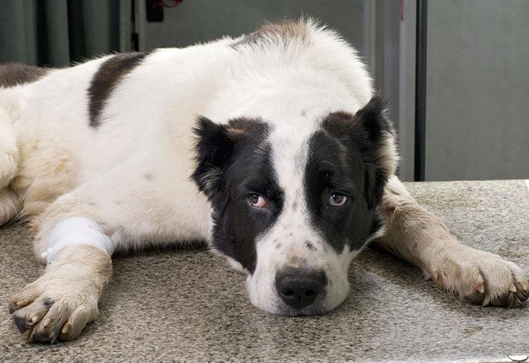 Le chien peut il se laisser mourir de chagrin mireille - Peut on couper les ongles des chiens ...