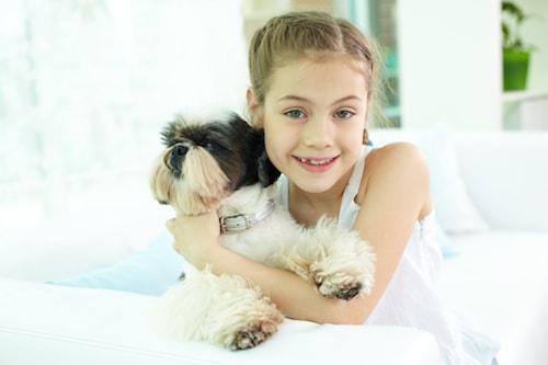 poux ceux des chiens et chats ne se transmettent pas l homme maladies et pr vention. Black Bedroom Furniture Sets. Home Design Ideas
