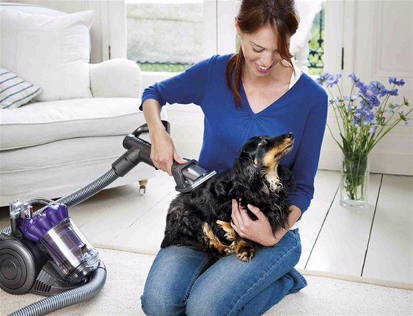 classic style 50% price lower price with Dyson pense entretien du chien et… maison plus saine - soins ...