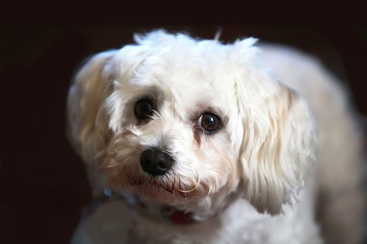calmant chien homeopathie. Black Bedroom Furniture Sets. Home Design Ideas