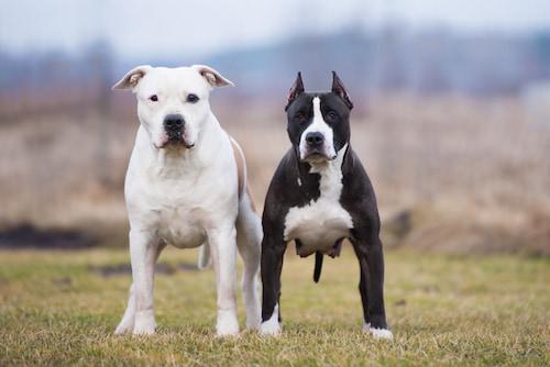 choisir un nom pour son chien oui pas n importe quoi actualit chien sant vet. Black Bedroom Furniture Sets. Home Design Ideas