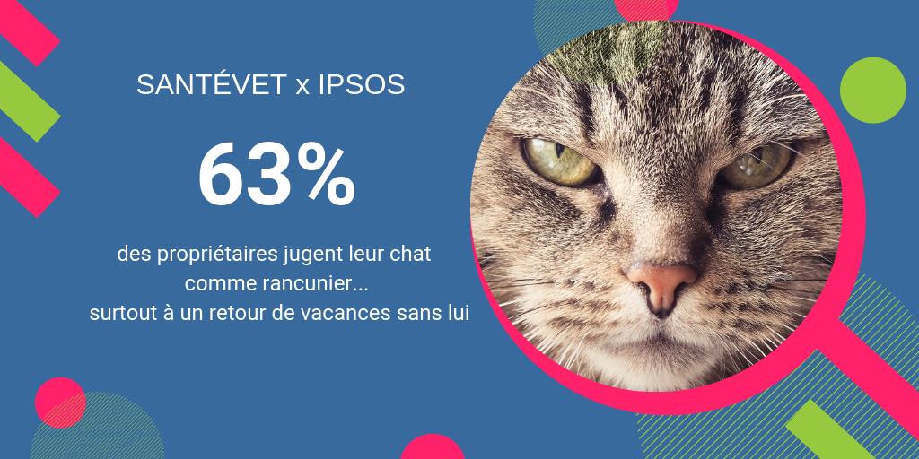 le chat un animal rancunier ?