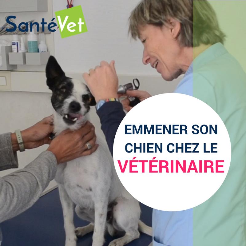Trucs & astuces chien - SantéVet