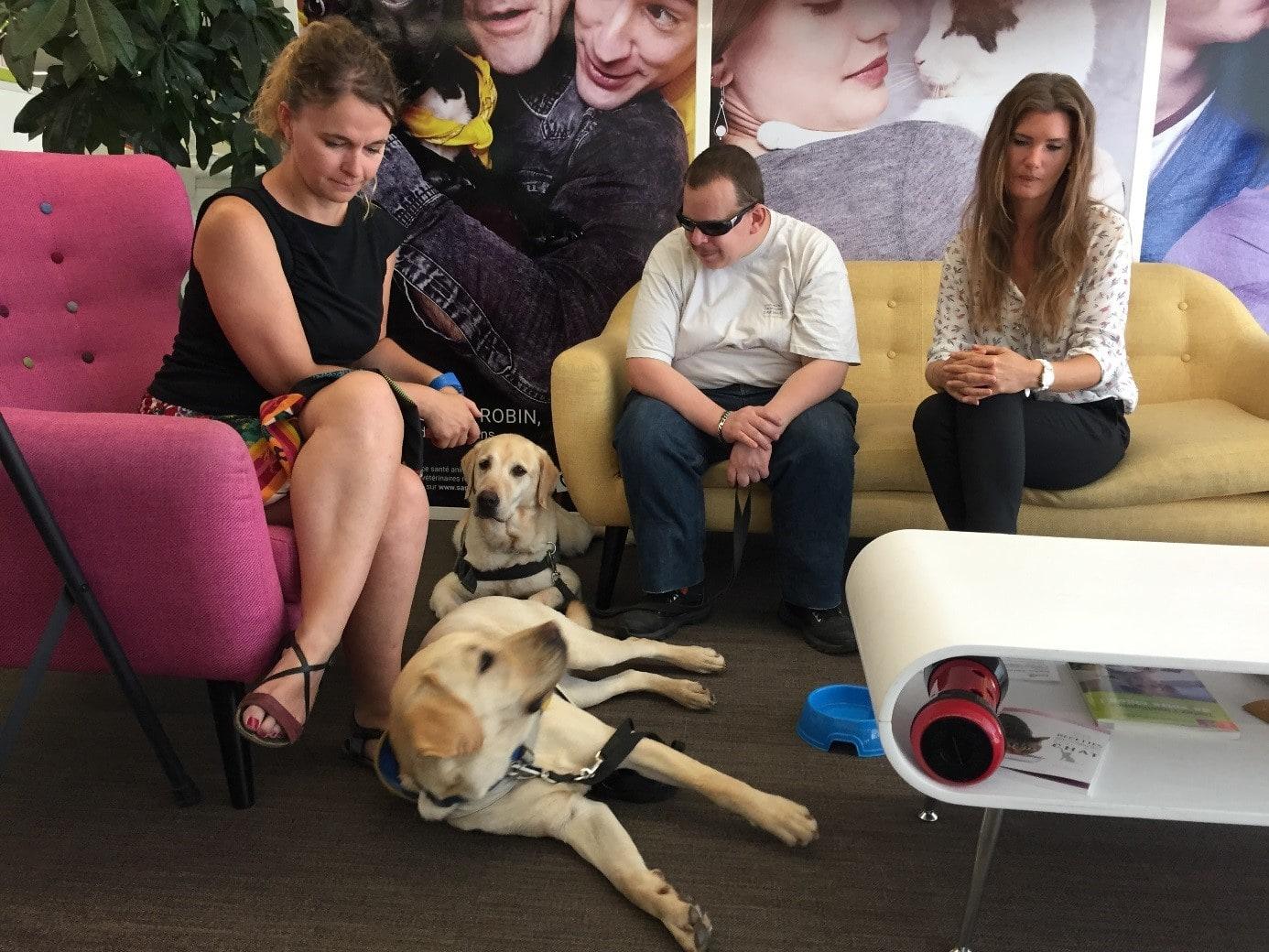 devenir chien guide pour aveugle sant vet. Black Bedroom Furniture Sets. Home Design Ideas