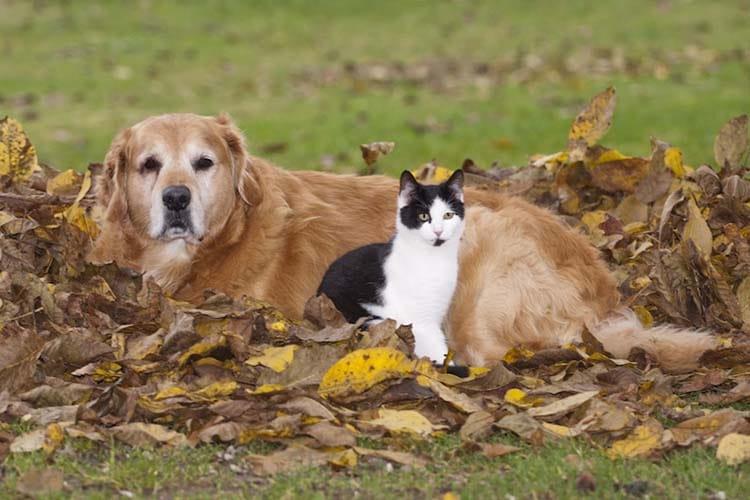 Bien aborder l automne avec son chien ou son chat for Repulsif chien et chat exterieur