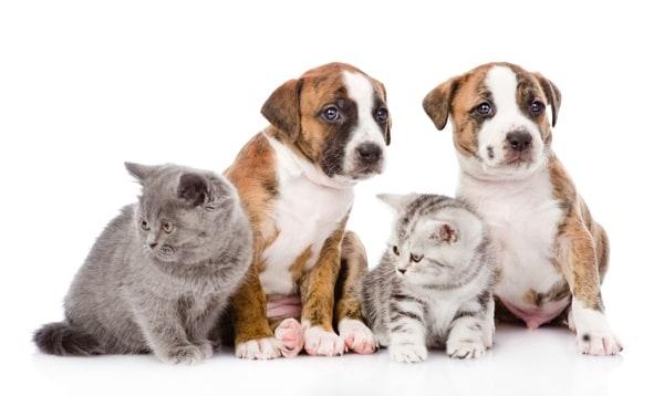 eleveur particulier refuge bien choisir son chien ou chat dossiers chien sant vet. Black Bedroom Furniture Sets. Home Design Ideas