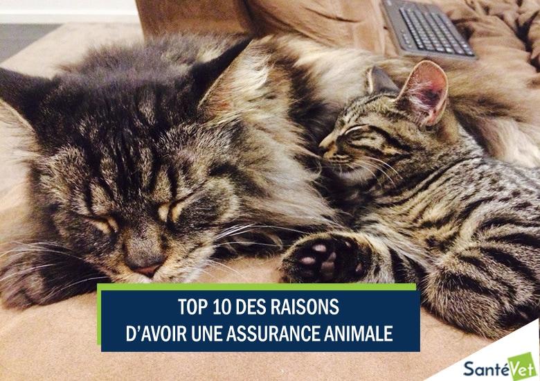 top 10 des raisons d 39 avoir une assurance animale assurance animaux chien sant vet. Black Bedroom Furniture Sets. Home Design Ideas