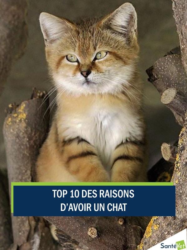 Top 10 Des Raisons D Avoir Un Chat Trucs Et Astuces Chat Santevet