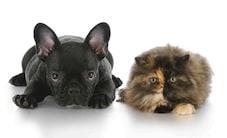antiparasitaires chien et antiparasitaire chat demander conseils au v t rinaire maladies et. Black Bedroom Furniture Sets. Home Design Ideas