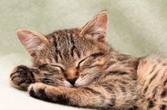 Combien de temps et comment dort un chien ou un chat trucs et astuces chat sant vet - Combien de temps un chat peut disparaitre ...
