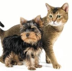 pipi de chien chat et nac un nouveau produit pour en venir bout trucs et astuces chat. Black Bedroom Furniture Sets. Home Design Ideas