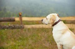 maladie d aujeszky 3 cas chez des chiens dans la meuse actualit chien sant vet. Black Bedroom Furniture Sets. Home Design Ideas