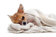 laver son chien m me en hiver soins et entretien. Black Bedroom Furniture Sets. Home Design Ideas