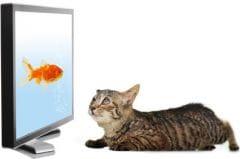 Vision du chat  TV, vidéo, ordinateur\u2026 ce qu\u0027il perçoit