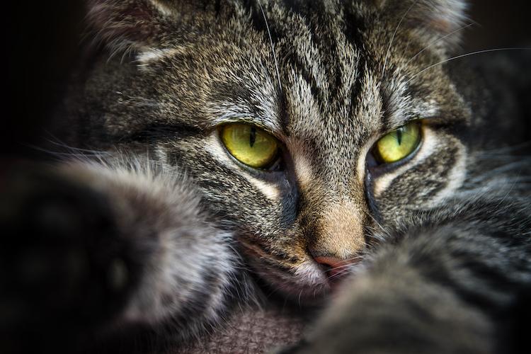 chat européen gratuit sans inscription)