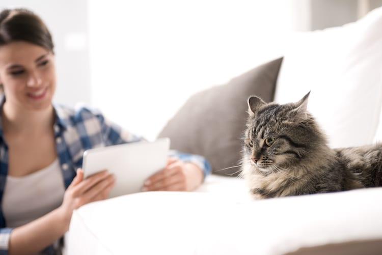 Vers du chats  ils sont dangereux pour lui et pour vous