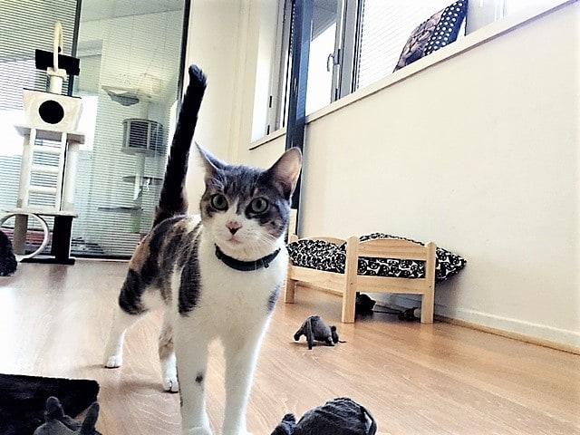 le jardin des chats des h tels pour chats paradisiaques trucs et astuces chat sant vet. Black Bedroom Furniture Sets. Home Design Ideas