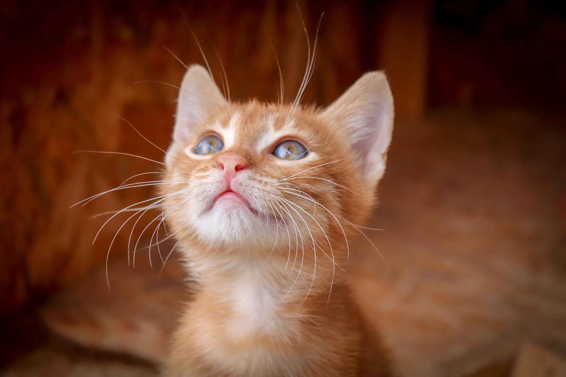 chaton et stérilisation