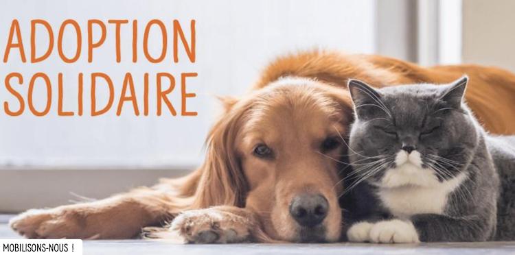 Adoptions Solidaires A La Spa Une Reussite Actualite Chien Santevet