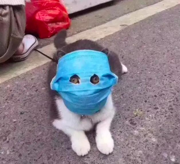 Masques pour chiens et chats : est-ce vraiment utile ? - actualité - chien  - SantéVet