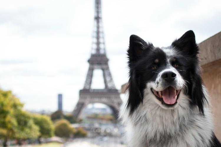 Bientot Un Permis Pour Adopter Un Animal De Compagnie Actualite Chien Santevet