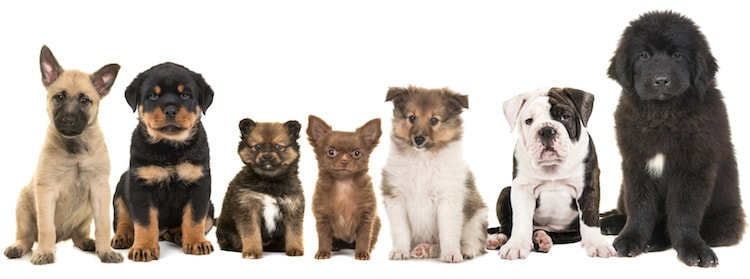 centrale canine nom de chien en o