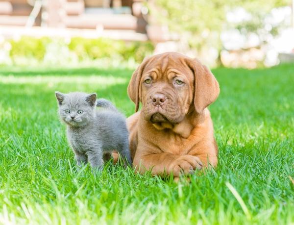 Les épillets sont un vrai danger pour votre chien ou chat