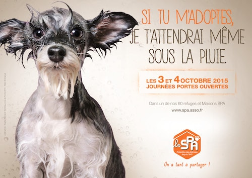 Spa Humour Et Tendresse Pour Adopter Un Chien Ou Chat Actualite