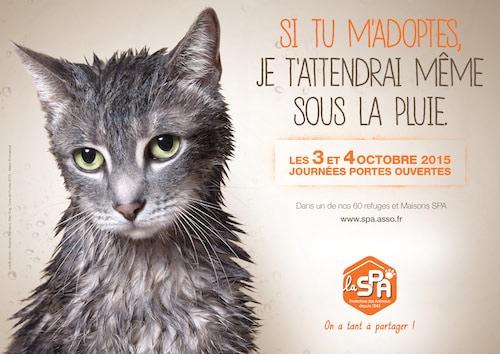 Spa Humour Et Tendresse Pour Adopter Un Chien Ou Chat Actualite Chien Santevet