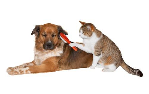 A l 39 automne chiens et chats perdent davantage de poils - Enlever poil de chien voiture ...