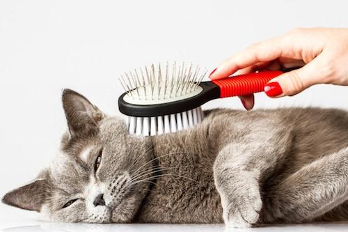 A l 39 automne chiens et chats perdent davantage de poils - Chat qui perd pas ses poils ...